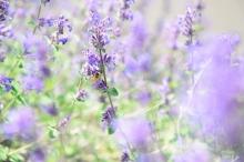 花粉症の症状と対策