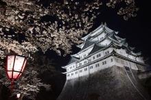 名古屋市16区のお花見スポット