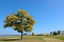 名古屋市緑区には魅力的な公園がいっぱい♪