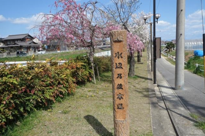 あま市甚目寺での花見スポット水辺乃並木道