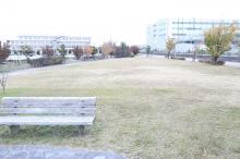 二ツ寺親水公園で生き物・植物散策♪