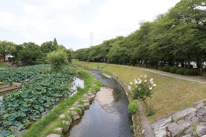 大賀ハスの名所 三又ふれあい公園